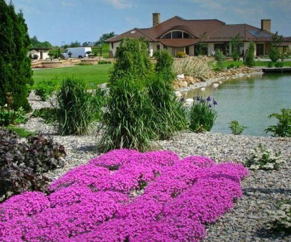 Staw kąpielowy i kwitnący floks szydlasty