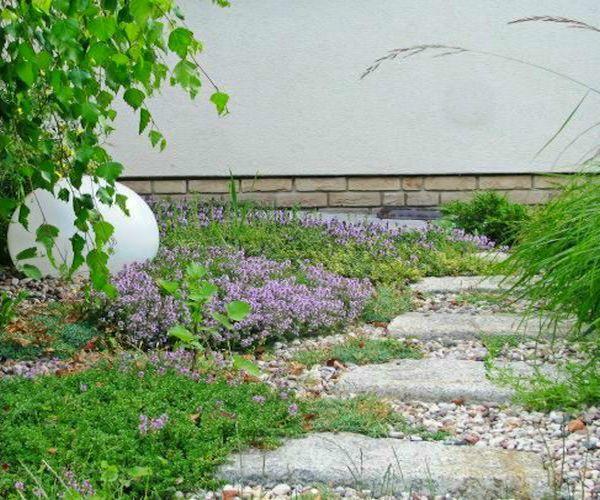 Granitowa ścieżka w ogrodzie i płożący się tymianek