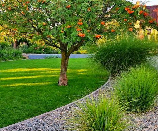 Owocująca jarzębina i rosnące pod nią trawy ozdobne