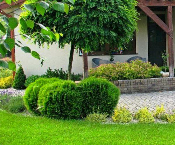 Roślinność otaczająca taras ogrodowy