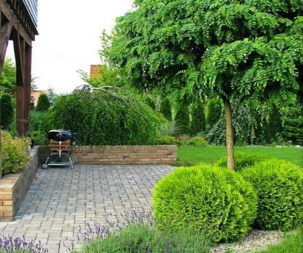 Widok na taras wypoczynkowy i rosnące przy nim drzewa brzozy i robinii kulistej