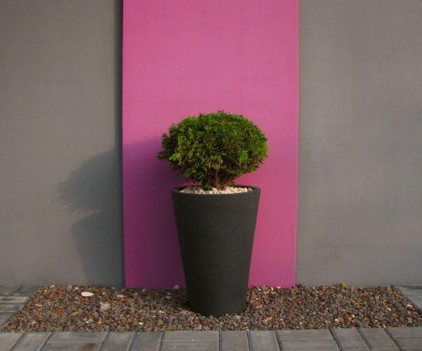 Energetyczny kolor wykożystany na elewacji budynku, na jego tle minimalistyczna kompozycja roślinna
